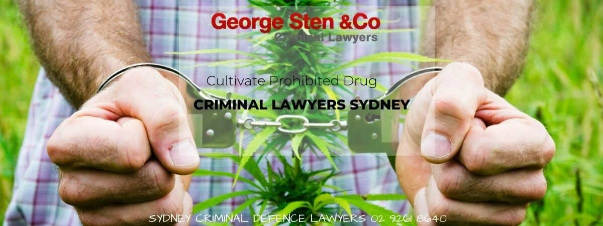 Cultivate Prohibited Drug - George Sten & Co